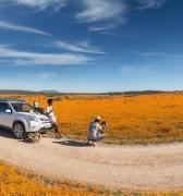 El asombroso espectáculo de las flores en el desierto de Sudáfrica